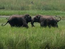 Ongekende achteruitgang natuur: miljoen soorten met uitsterven bedreigd
