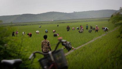 """""""40,3 miljoen moderne slaven wereldwijd, Noord-Korea spant de kroon"""""""