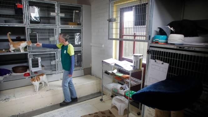 Nieuw asiel Eindhoven mogelijk zonder Dierenbescherming