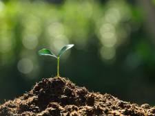 Eén minuut om een bos te planten in Vierhavenkwartier