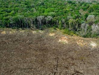 Eén op de drie boomsoorten is met uitsterven bedreigd
