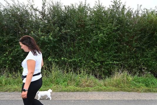 Een besmette meidoornhaag aan de Ten Holtweg bij Gassel.