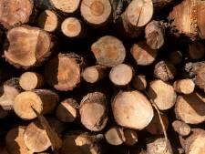 Provincie onderzoekt nut massale bomenkap in Gelderland