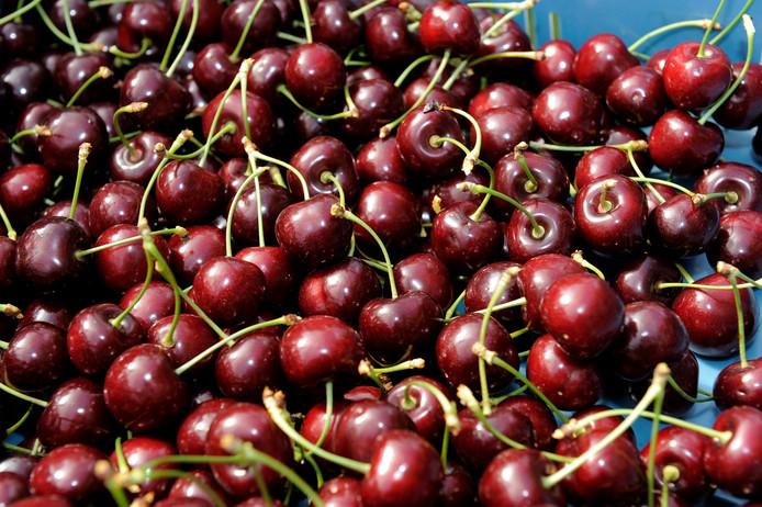 TIEL -  kersenpluk, oogsten, fruitkwekerij, kersen, kers, fruit