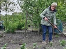 Deze volkstuinders uit Holten weten het zeker: niets lekkerder dan groente van eigen land