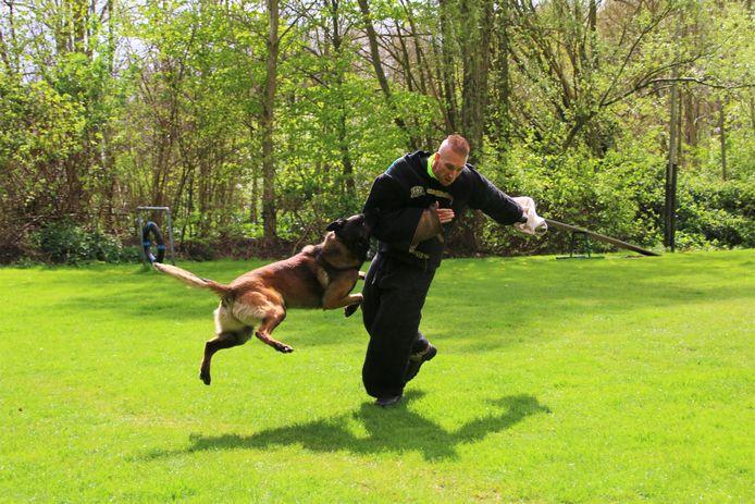 Jeffry van Lune als pakwerker in actie met een herdershond die wordt getraind om voor politie of defensie te werken.