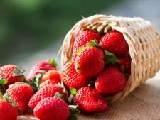 Overvloed aan aardbeien duwt de prijs omlaag