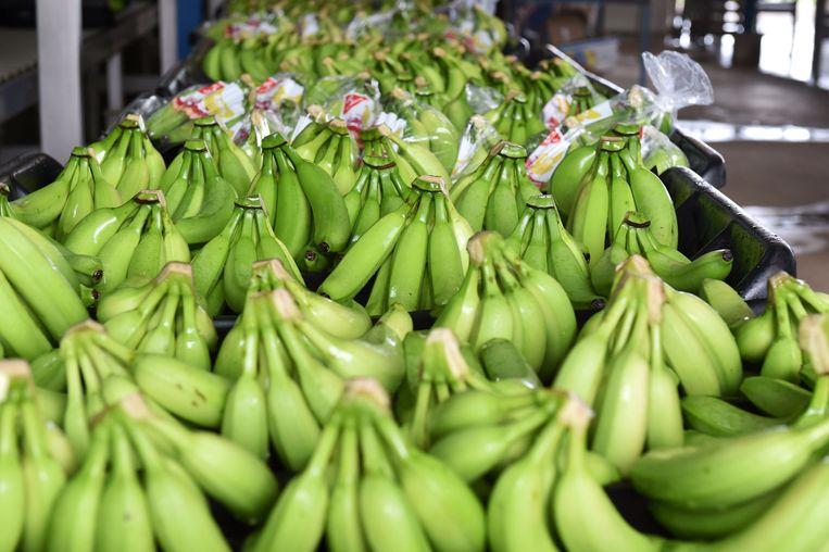 Een lading bananen kan wel eens een verrassing opleveren. Beeld AFP