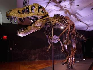 Zeker 2,5 miljard T. rexen zwierven rond op aarde, zo schatten onderzoekers