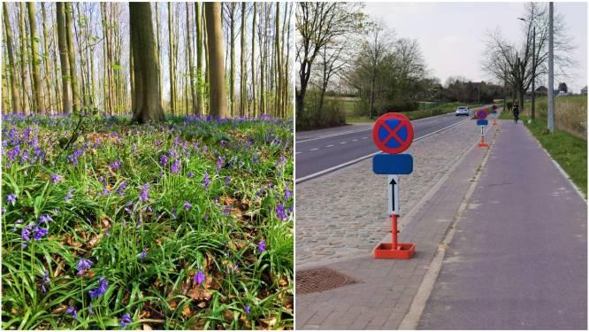 """Hoe hou je hyacintentoeristen weg uit het Hallerbos? Natuur en Bos maakt uitstapje onaantrekkelijk: """"Zelfs in openlucht is er een groot besmettingsrisico"""""""