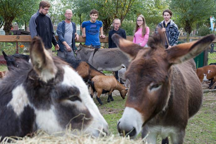 Vrijwilligers verzorgen de dieren van De Bossche Hoeve op de Kruiskamp in Den Bosch.