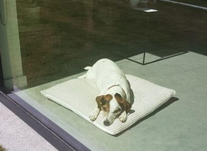 Hondje Stella ligt al tien dagen ziek op haar dekentje.