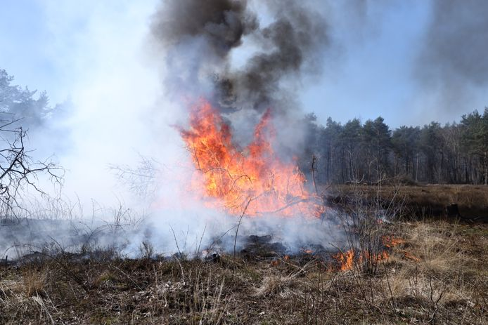 Een flink stuk heide is zondag bij Rozendaal afgebrand.