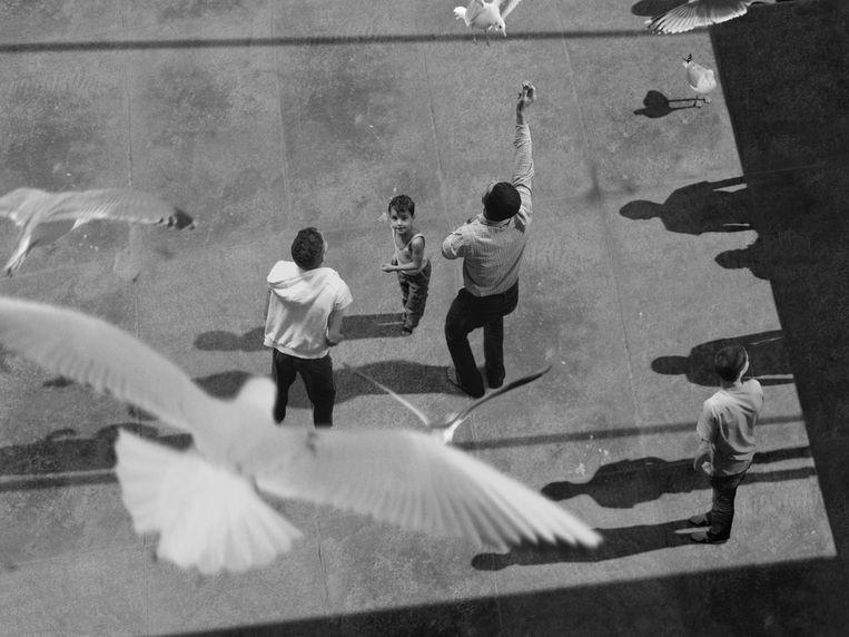Te zien op A Still Point of the Turning World: David Claerbout, The Algiers' Sections of a Happy Moment, 2008.  Beeld VG Bild-Kunst, Bonn, 2017, courtesy de kunstenaar en galeries Esther Schipper, Berlijn en Sean Kelly, New York