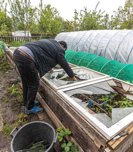Ravage in Zwolse volkstuinen: kassen gesloopt, gewassen overgoten met terpentine