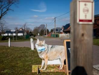 Op verkenning in wolvengebied? Landschap vzw heeft nieuwe wandeling uitgestippeld