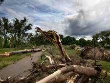 Bomenexperts uit Eindhoven: 'Geld nodig voor boombeheer'