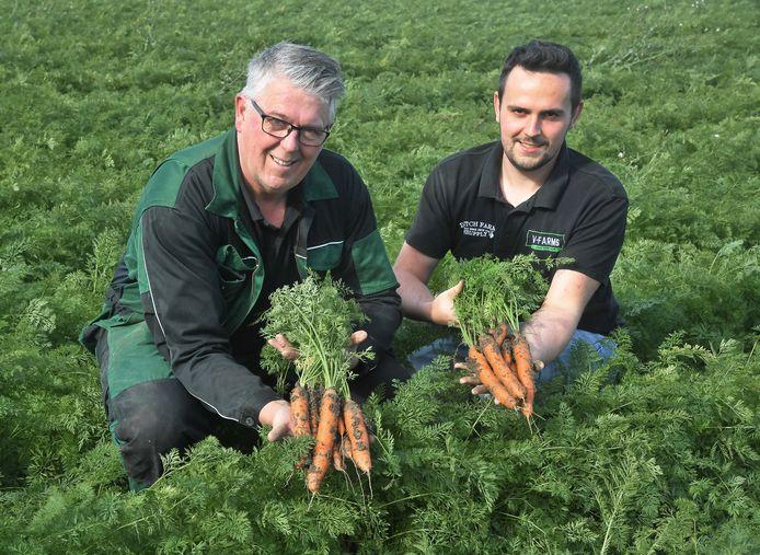 Wim Vael (links) en zoon Tom, de wortelen zijn vrijwel goed om te oogsten.