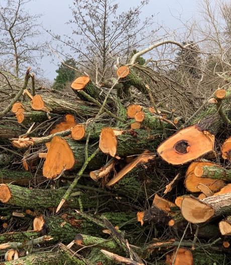 Bomenkap voor nieuwe rijksweg zorgt voor verbijstering bij bewoners Schiebroek