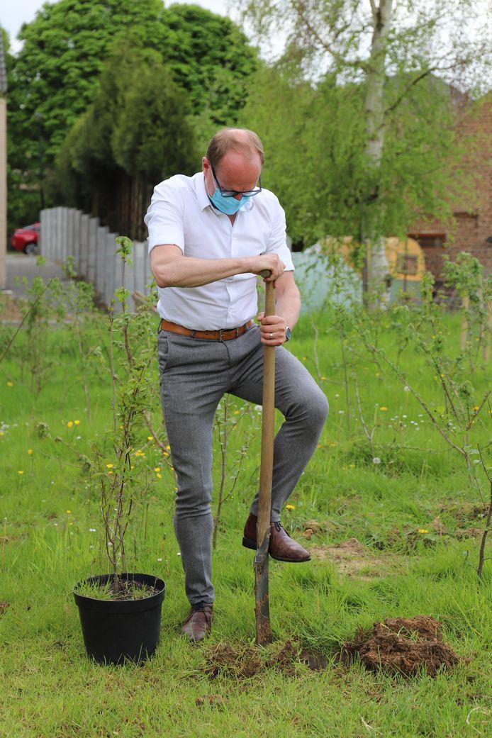 Vlaams minister Ben Weyts plantte vandaag de laatste van de in totaal 7.874 Gordelbomen.