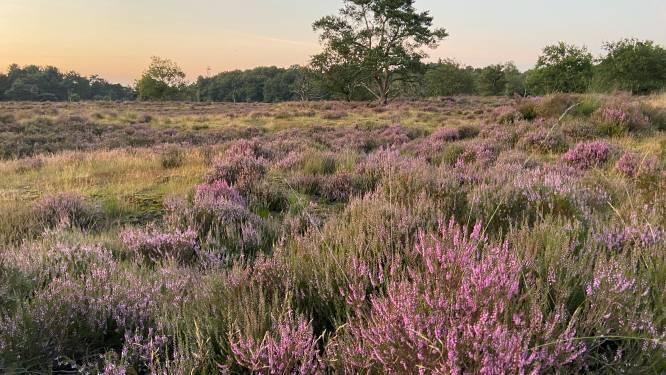 """Kalmthoutse Heide wordt (nog) geen Nationaal Park als het van gemeenten afhangt: """"Landbouw dreigt grote verliezer te worden"""""""