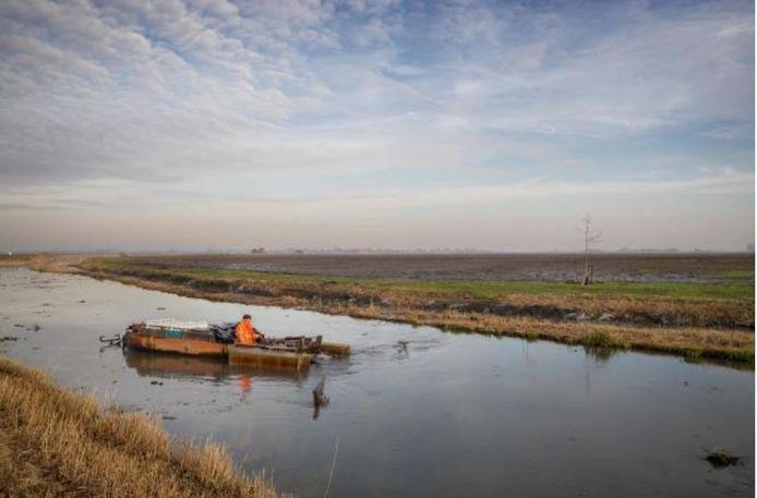Waterschap Hollandse Delta gaat heeft een groot deel van de sloten in de Drechtsteden in beheer.