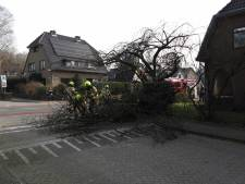 Geen storm maar toch valt een boom op een auto