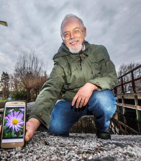 Haagse bloem gaat de wereld over: 'De foto wordt zo'n 78 miljoen keer per dag opgeroepen'