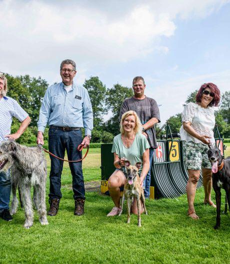 Windhondenclub Rijssen populair om mooie baan: Greyhound loopt er 350 meter in amper twintig seconden