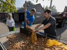 Opnieuw uien- en aardappelactie in Veldhoven: 'Van mij mogen ze dit elk jaar wel doen'