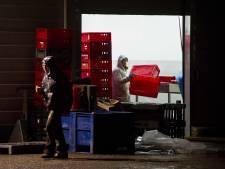 Du cheval dans 50.000 tonnes de boeuf vendues en Europe?