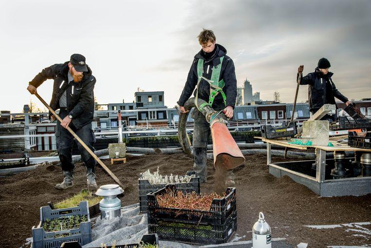 Groene dakenproject van Stadgenoot in de Oosterpakbuurt. Beeld Hollandse Hoogte / Jean-Pierre Jans