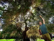 Van hallucinaties tot zakdoekbloemen: de geheimpjes van het Oderkerkpark