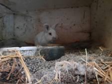 Zooitje in woning in gemeente Sint-Michielsgestel: meer dan vijftig konijnen, duiven en parkieten meegenomen