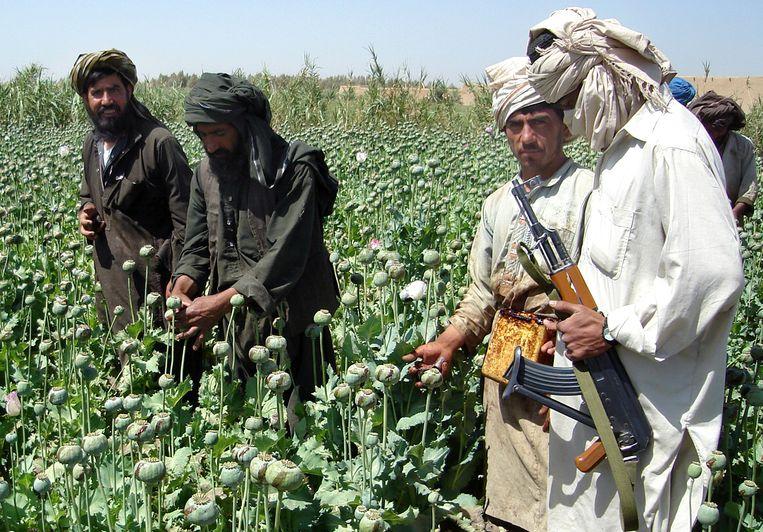 'De taliban verdient jaarlijks naar schatting 100 miljoen dollar aan de papaverteelt en de opiumproductie.' Beeld ASSOCIATED PRESS