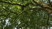 Gemeentelijke groepsaankoop van bomen en hagen