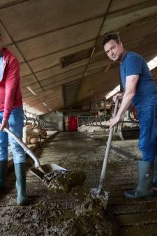 Is koeienmest het nieuwe groene goud voor waterstofgas? Larense boeren denken van wel