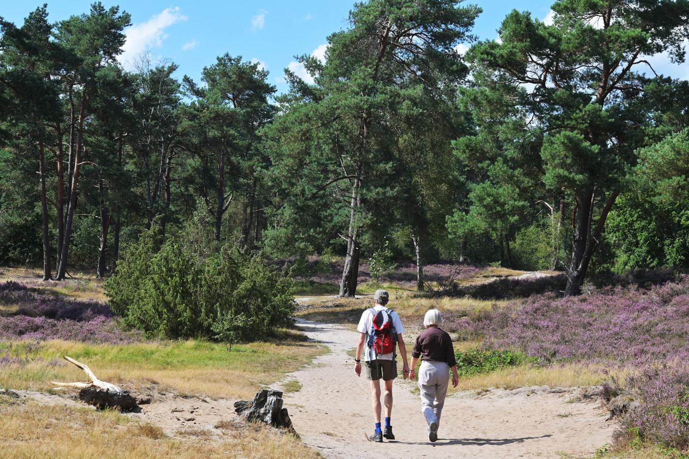 De natuur in combinatie met veel uitjes maakt de Utrechtse Heuvelrug een aantrekkelijk vakantiegebied.