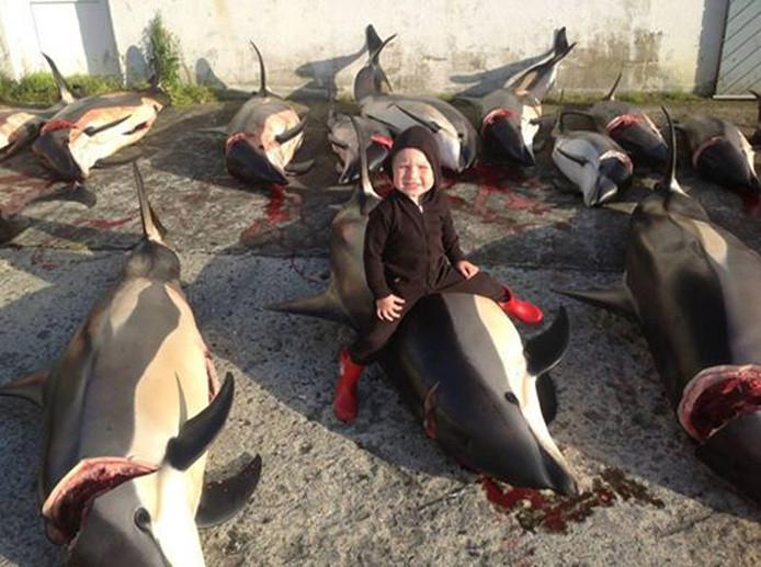 450 Dolfijnen Afgeslacht Op Faroereilanden Nieuws Adnl