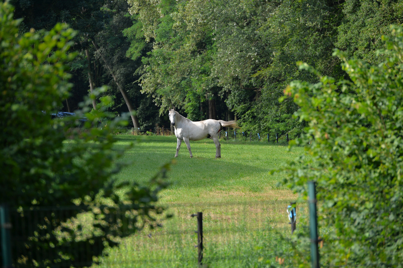 Het gewonde paard stond na de aanrijding al vrij snel weer in de wei.