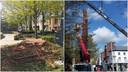 Links wat rest van de sequoia aan de Halse bib. Rechts de firma aan het werk die de boom weghaalde.