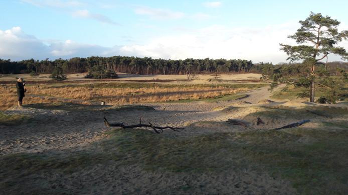 Nationaal Park De Loonse en Drunense duinen bij Kaatsheuvel.