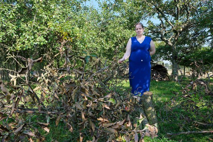 Alleen een stukje van de stam en de takken met de appels lieten de dieven liggen. Nele Leys begrijpt niet wie er achter de diefstal van haar appelboom zit.