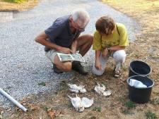 Drie kerkuiltjes smoren te Oisterwijk in hun nest: hitte raakt de natuur hard