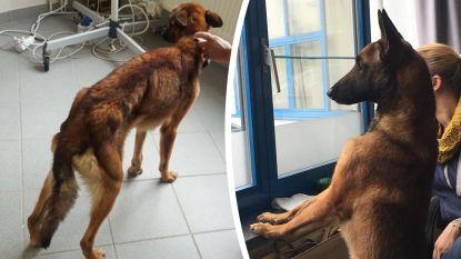 """Verwaarloosde hond aan de beterhand: """"Ferry ontdekt nu plezier van spel en balletjes"""""""