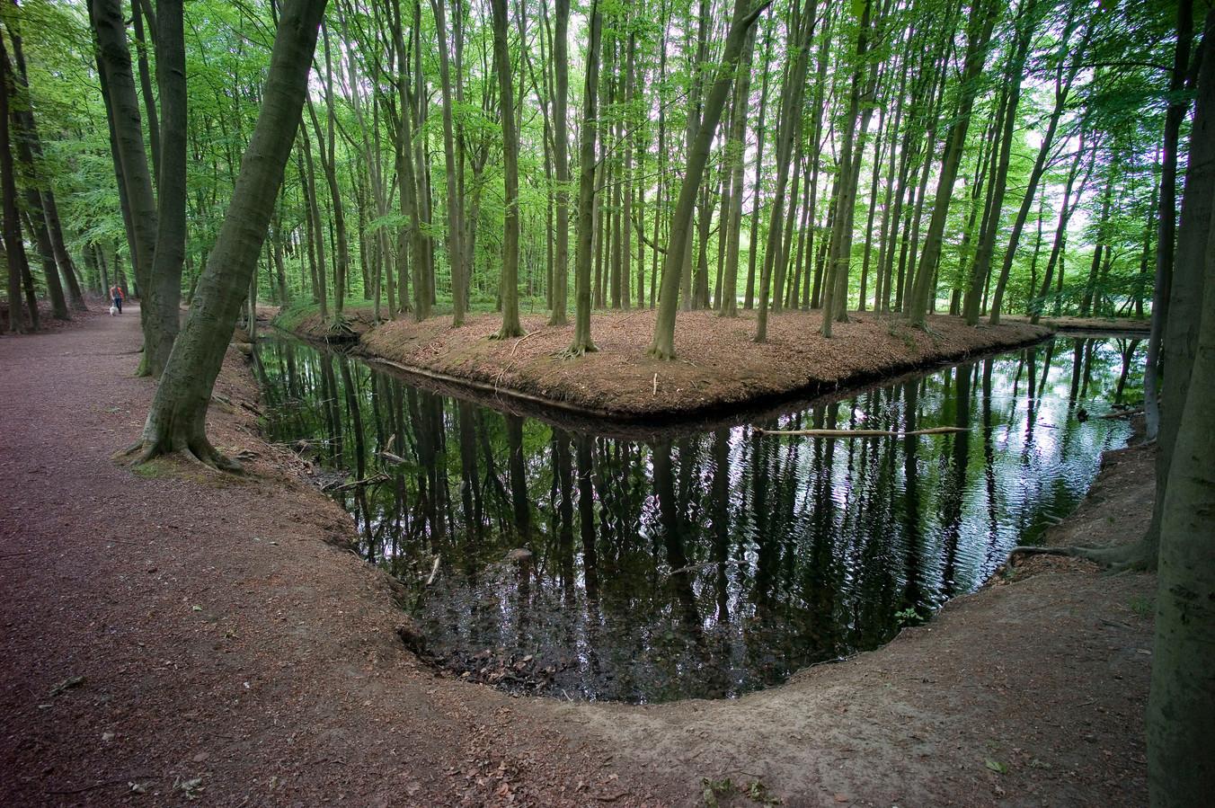 In oktober moet een grootschalige revitalisatie van 'De Eilandjes' beginnen, waarbij twee derde van de bestaande bomen wordt gekapt en vervangen door nieuwe, gezonde bomen.