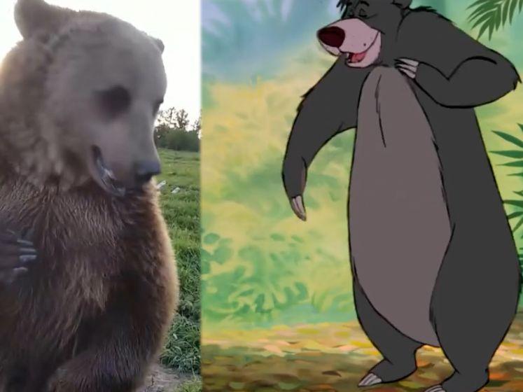Bestaat Baloe echt? Russische beer praat en staat op twee poten