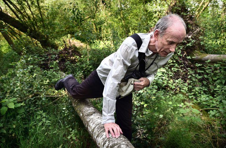 Wim van Opbergen van Werkgroep Behoud de Peel in natuurgebied De Peel.  Beeld Marcel van den Bergh
