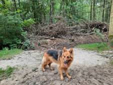 Orde in Liesbos hersteld: 'Respecteer de natuur en blijf op de paden'