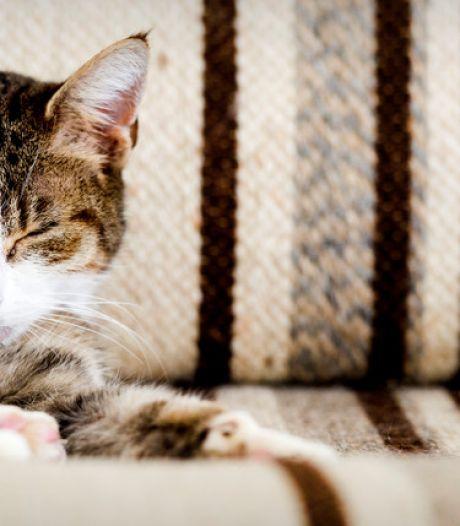 Kat vermoedelijk beschoten met luchtbuks in Putten